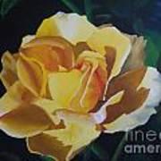 Golden Showers Rose Poster