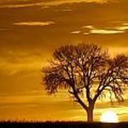 Golden Sunrise Silhouette Poster