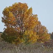 Golden Tree II Poster