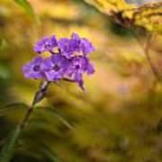 Golden Violets Poster