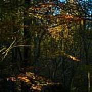 Golden Woodland Poster