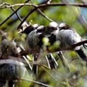 Gossip Birds Poster