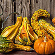 Gourds Against Wooden Wall Poster