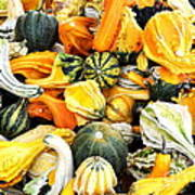 Gourds And Squash Poster