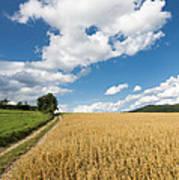 Grainfield Blue Sky Poster