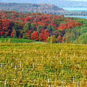 Grand Traverse Winery In Autumn Poster