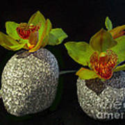 Granite Orchids Poster