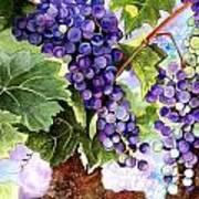 Grape Vines Poster by Karen Casciani