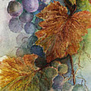 Grapes Iv Poster by Judy Dodds