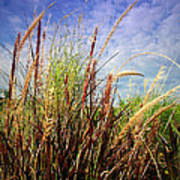 Grasses Standing Tall Poster