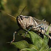 Grasshopper 2 Poster