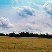 Grassy Country Fields Poster