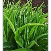 Grassy Drops Poster