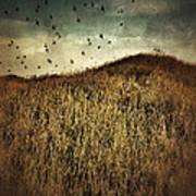 Grassy Hill Birds In Flight Poster