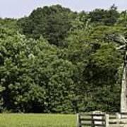 Grave Of Lafayette Meeks Appomattox Virginia Poster