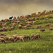 Grazing Sheep Poster