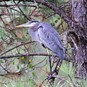 Great Blue Heron - Happy Place Poster
