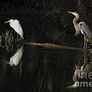 Great Blue Heron And Great Egret At Day's End Poster