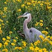 Great Blue Heron In The Flowers Poster