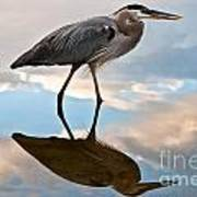 Great Blue Reflections Poster