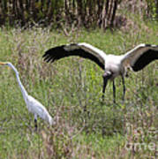 Great Egret And Wood Stork In The Marsh Poster
