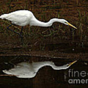 Great Egret Reflection 2 Poster