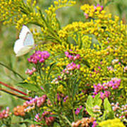 Great Southern White Butterfly Likes The Pink Flowers Poster