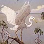 Great White Heron, White Morph Of Great Poster by Walter A. Weber