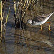 Greater Yellowlegs At Spi Poster