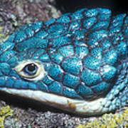 Green Arboreal Alligator Lizard Poster