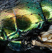 Green Blow Fly Poster