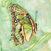Green Butterfly Poster by Linda Pope