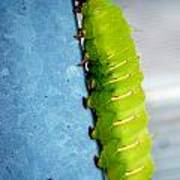 Green Caterpillar  Poster