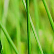 Green Green Grass Of Home Poster