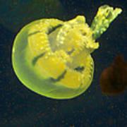 Green Jellyfish Poster