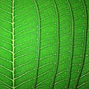 Green Leaf Texture Poster