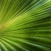 Green Palm Poster by Al Hurley