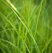 Green Prairie Grass Poster
