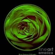 Green Rose On Black Poster