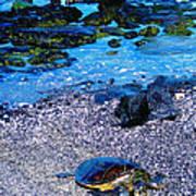 Green Sea Turtle Honu Poster