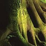 Green Trunk Poster
