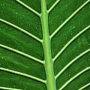Green Veiny Leaf 1 Poster