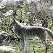 grey Fox 2 Poster