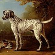 Grey Spotted Hound Poster