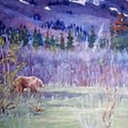 Grizzly Bear Near Haines Alaska Poster