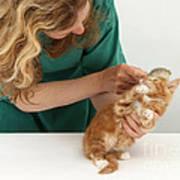 Grooming A Kitten Poster