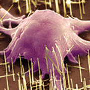 Growing Stem Cells On Nanowires Poster