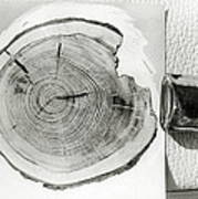 Growth Rings On A Tree From Tunguska Poster