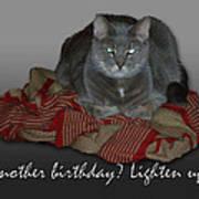 Grumpy Cat Birthday Card Poster