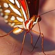 Gulf Fritillary Poster by Billy  Griffis Jr